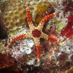 Best Diving Destinations in Indonesia