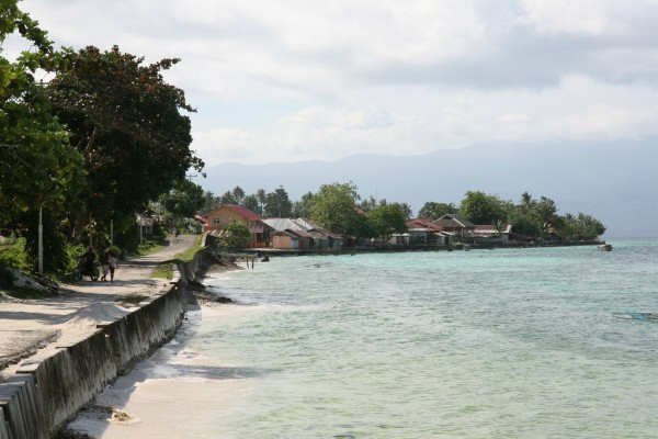 The Beech in Maluku Islands