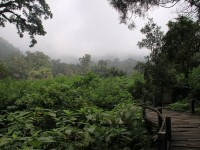 The Pangrango Gede National Park