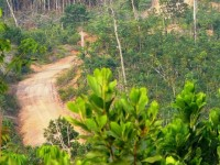 Top 5 attractions for nature lovers in West Kalimantan