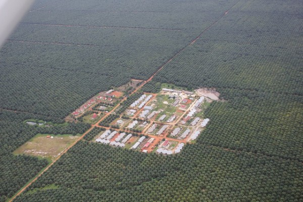 Palm oil refinery in Central Kalimantan