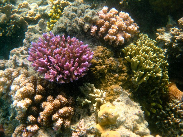 Coral reefs in Central Sulawesi