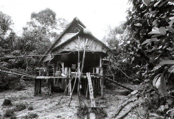 Indonesian jungle house on piles